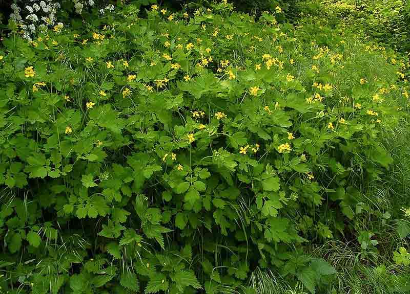 10 растений из леса, которые лучше даже не трогать